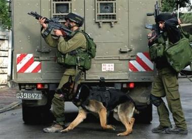 israeli_dog3